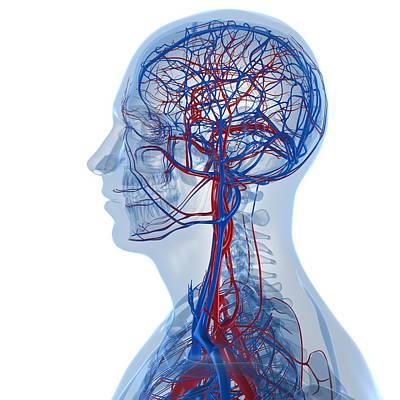 Human Joint Digital Art - Vascular System, Artwork by Sciepro