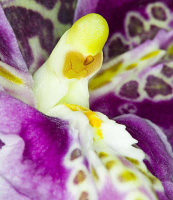 Photograph - Exotic Orchid Flower by C Ribet