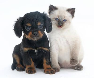 Rag Doll Photograph - Puppy And Kitten by Jane Burton