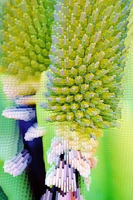 Aloe Vera Flower Buds Art Print