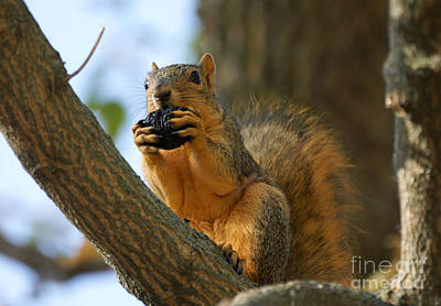 Squirrel Art Print by Lori Tordsen