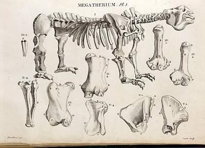 1804 Megatherium Cuvier Plate Art Print by Paul D Stewart