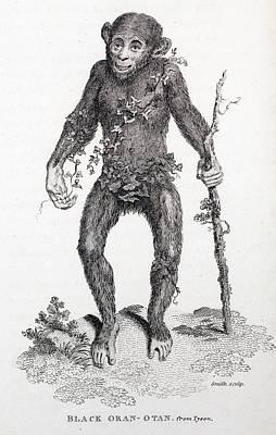 1809 Reprint Of Tyson 1698 Chimpanzee Art Print