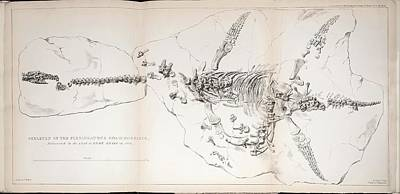 Buckland Photograph - 1823 First Complete Plesiosaur Fossil by Paul D Stewart