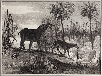 1837 Extinct Prehistoric Animals Paris Art Print by Paul D Stewart