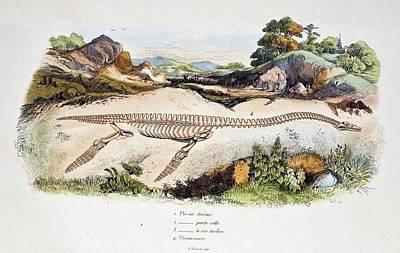 Conybeare Photograph - 1838 Guerin Plesiosaur Reconstruction. by Paul D Stewart