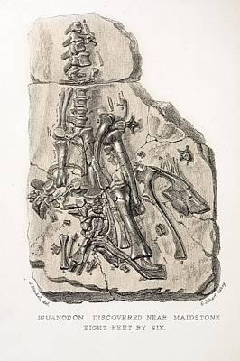 Mantell Photograph - 1838 Maidstone Iguanodon 'mantell Piece' by Paul D Stewart
