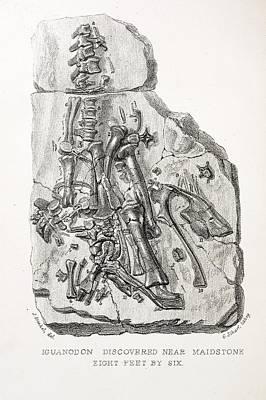 Mantell Photograph - 1838 Maidstone Iguanodon 'mantell Piece'a by Paul D Stewart