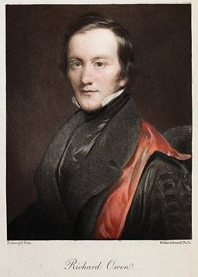 Darwin Fossils Photograph - 1841 Richard Owen Coined 'dinosaur' by Paul D Stewart