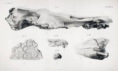Fossil Reconstruction Photograph - 1848 Hydrarchos Zeuglodon Basilosaurus by Paul D Stewart