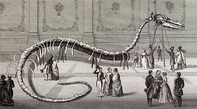 1851 Hydrarchos Whale Fake Monster Fossil Art Print by Paul D Stewart