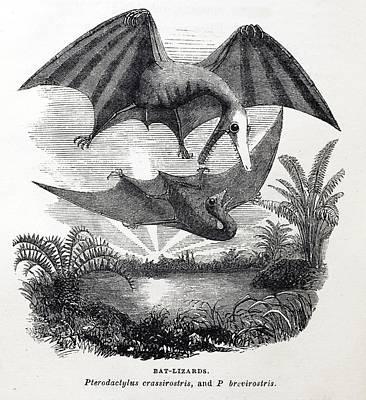 Pterodactyle Photograph - 1857 Gosse Pterodactyle Bat-lizards by Paul D Stewart