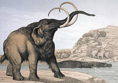 Fossil Reconstruction Photograph - 1862 British Mammoth With Carnivores by Paul D Stewart