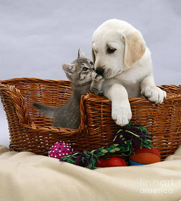 Lab Pup Photograph - Puppy And Kitten by Jane Burton