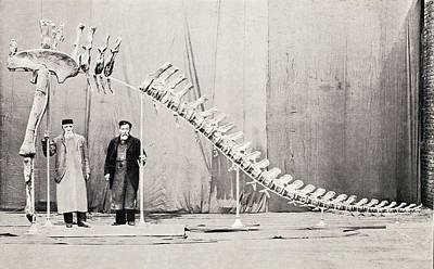 Fossil Reconstruction Photograph - 1905 Sauropod Dinosaur Cetiosaurus Leedsi by Paul D Stewart