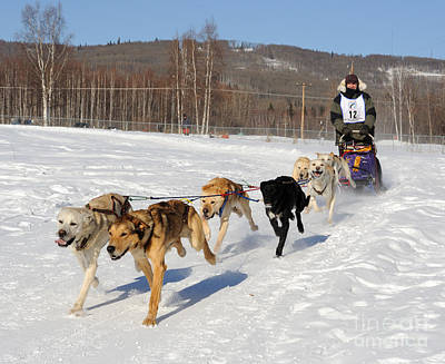 2010 Limited North American Sled Dog Race Art Print by Gary Whitton