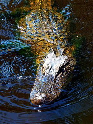 Crocodile Digital Art - Alligator In Mississippi River by Paul Ge