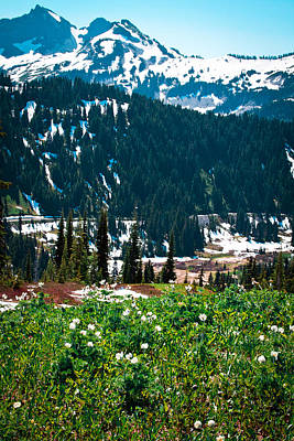 Photograph - Alpine Meadow Vi At Mount Rainier by David Patterson