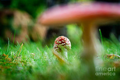 Photograph - Amanita by Kati Finell