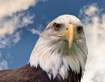 American Bald Eagle Art Print by Ken Wolter