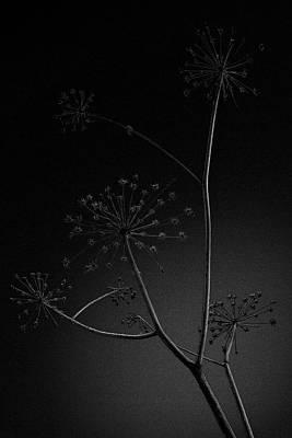 Keck Photograph - Anthriscus Sylvestris by Jouko Lehto