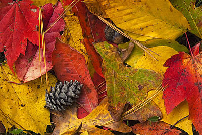Pine Cones Photograph - Autumn Colors by Andrew Soundarajan