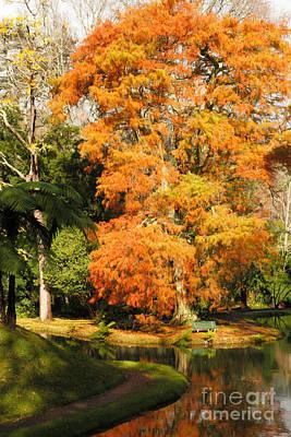 Furnas Photograph - Autumn Colors by Gaspar Avila