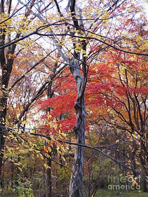 Photograph - Autumn by Eena Bo