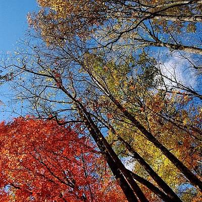 Forest Wall Art - Photograph - Autumn Leaves - Nc by Joel Lopez