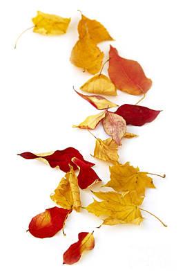 Autumn Leaves Art Print by Elena Elisseeva