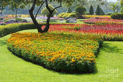 Beautiful Flowers In Park Original