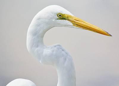 Beautiful Great White Egret Art Print by Paulette Thomas