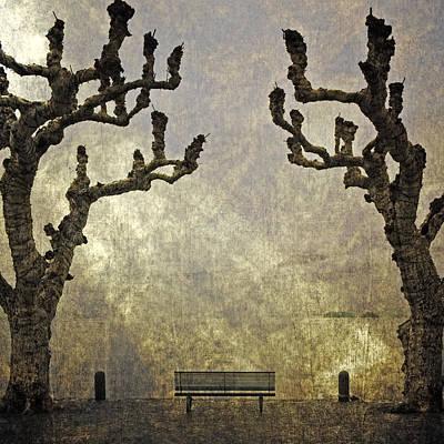 Plane Tree Photograph - Bench Under Plane Trees by Joana Kruse