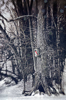 Photograph - Bird House With Red Ribbon In The Trees by Sandra Cunningham