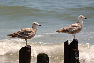 Door Locks And Handles - 2 Birds On Poles by Artie Wallace