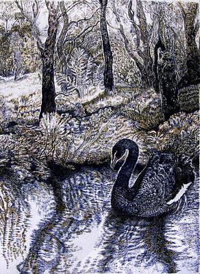 Wetlands Drawing - Black Swan Gliding No 2 by Helen Duley