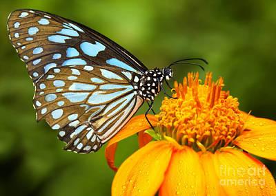Blue Butterfly Original by Anek Suwannaphoom
