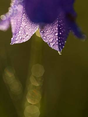 Dappled Light Photograph - Bluebell by Odon Czintos