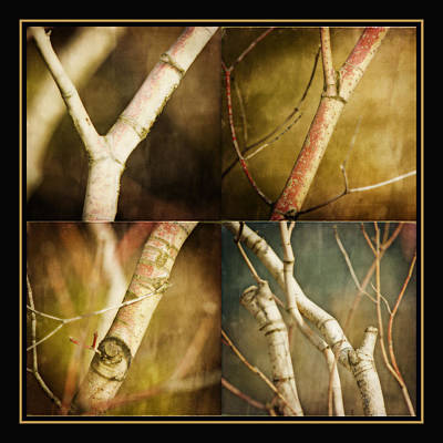 Branching Out Art Print by Bonnie Bruno