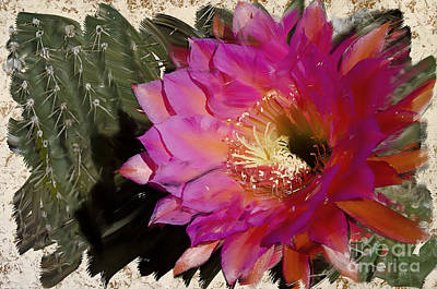 Photograph - Cactus Flower  by Jim and Emily Bush