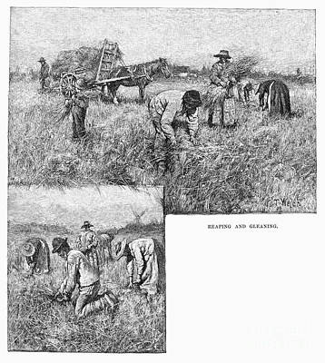 Gleaners Photograph - Canada: Farming, 1883 by Granger