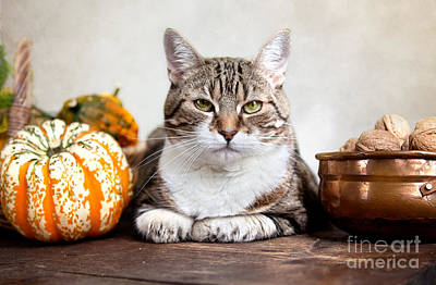 Cat And Pumpkins Art Print