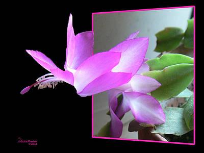 Photograph - Christmas Cactus by EricaMaxine  Price