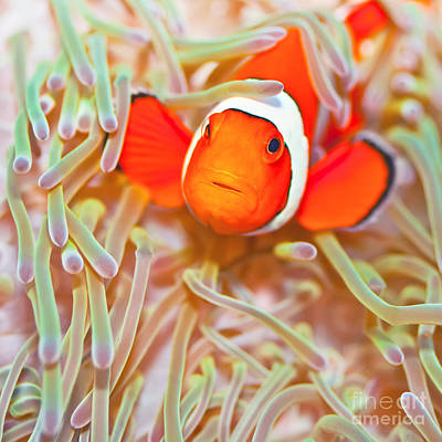 Undersea Photograph - Clownfish by MotHaiBaPhoto Prints