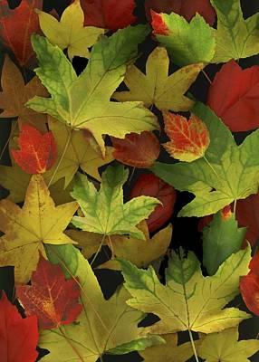 Colorful Autumn Leaves Art Print by Deddeda