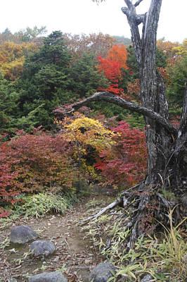 Photograph - Colors by Masami Iida