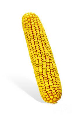 Corn Cob Art Print by Carlos Caetano