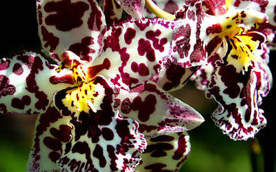 Cribet Exotic Orchids Art Print by C Ribet