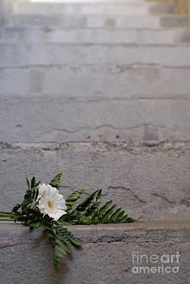 Daisy Flower On Concrete Steps Art Print by Sami Sarkis