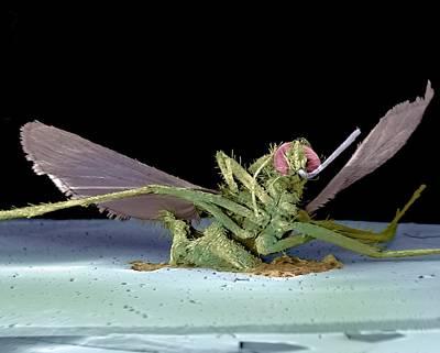 Dead Fly, Sem Art Print by Volker Steger